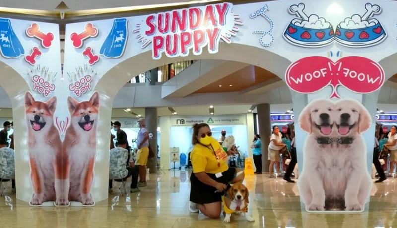 www.nusabali.com-anjing-dan-kucing-bisa-diajak-ngemall-di-level-21-bali