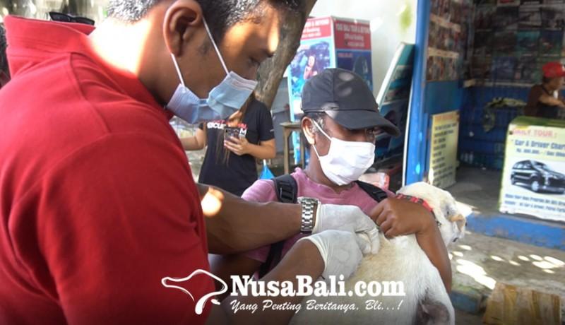 www.nusabali.com-puluhan-anjing-liar-pantai-legian-divaksin