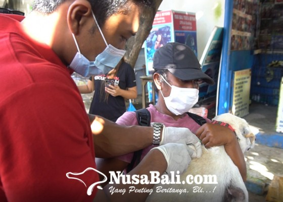 Nusabali.com - puluhan-anjing-liar-pantai-legian-divaksin