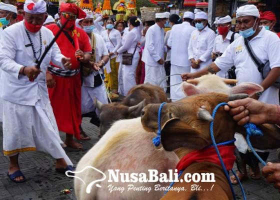Nusabali.com - wewalungan-di-tuwek-secara-simbolis-dengan-keris-pusaka-ida-bhatara-ratu-bagus-pande