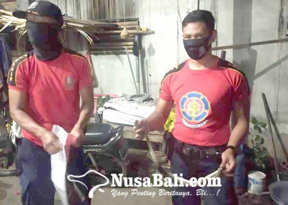 Nusabali.com - ular-masuk-kamar-mandi-pemilik-rumah-trauma