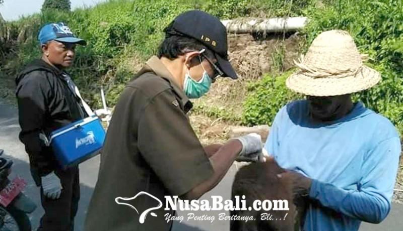 www.nusabali.com-2-desa-di-gianyar-zona-merah-rabies
