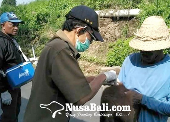 Nusabali.com - 2-desa-di-gianyar-zona-merah-rabies
