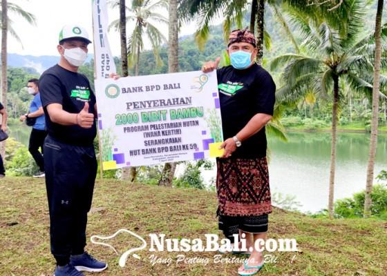 Nusabali.com - sinergi-dengan-pemkab-bpd-bali-sumbang-2000-bibit-bambu-petung