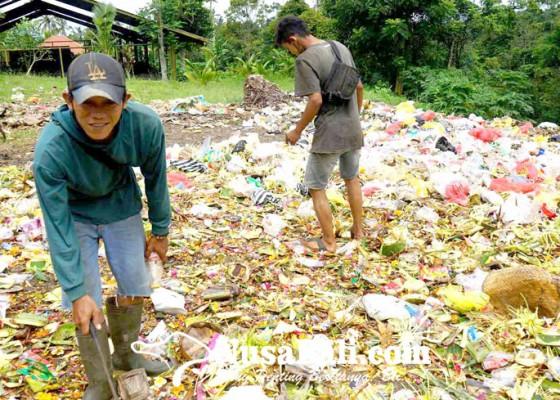 Nusabali.com - pamedek-sepi-sampah-botol-plastik-sedikit