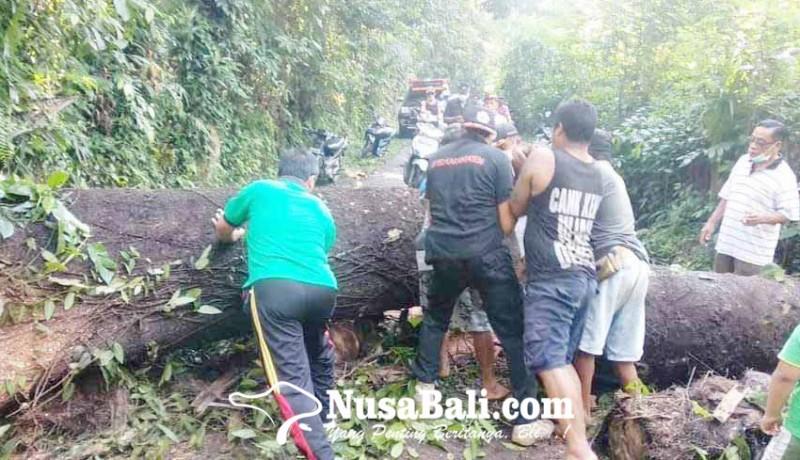 www.nusabali.com-pohon-tumbang-tutup-jalan-di-desa-selumbung