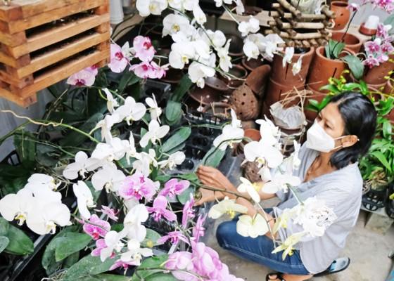 Nusabali.com - ri-ekspor-tanaman-hias-ke-inggris-dan-as