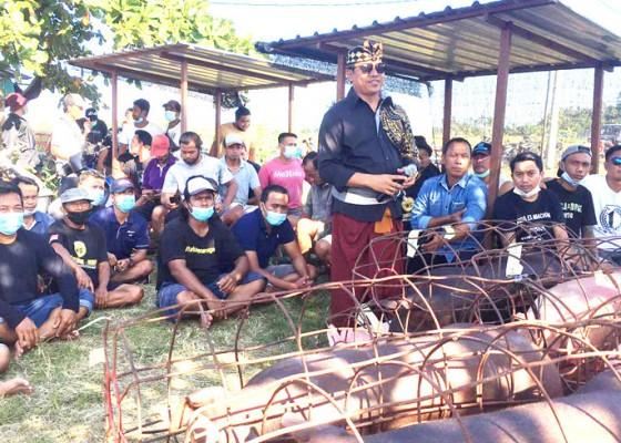 Nusabali.com - suyasa-bagikan-daging-babi-empat-ton