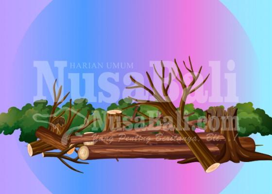 Nusabali.com - pohon-perindang-tumbang-tutup-akses-jalan