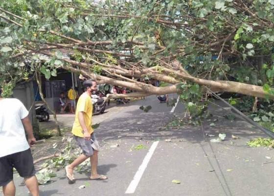 Nusabali.com - pohon-tumbang-timpa-emperan-warung