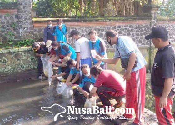 Nusabali.com - dinas-perikanan-tebar-2000-bibit-nila