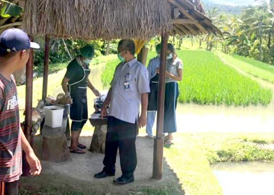 Nusabali.com - program-mina-padi-kurang-diminati-di-tabanan