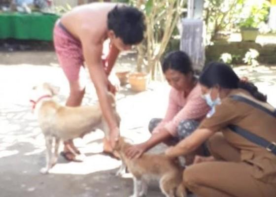 Nusabali.com - anjing-rabies-gigit-4-warga-di-tihingan