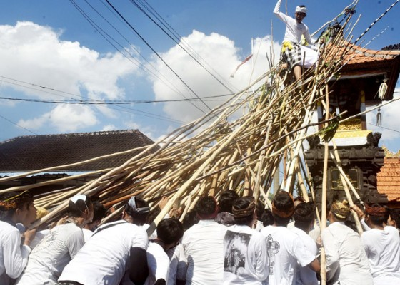 Nusabali.com - walau-pandemi-tradisi-mekotek-tetap-digelar