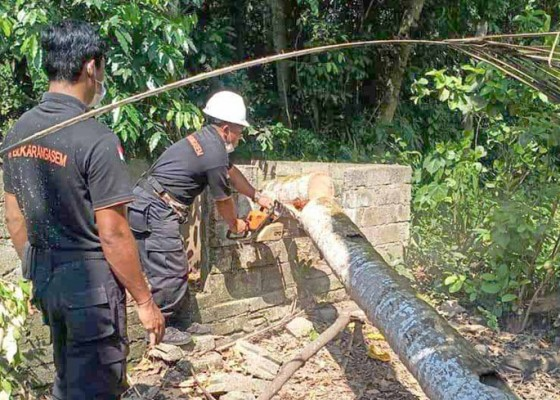 Nusabali.com - dapur-dan-kamar-mandi-tertimpa-pohon-kelapa