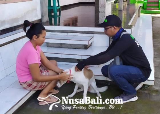 Nusabali.com - anjing-rabies-gigit-7-warga-nusasari