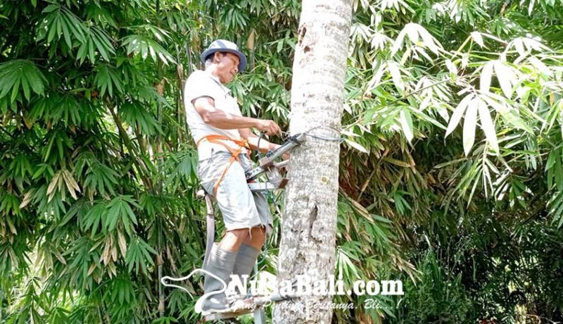 www.nusabali.com-dari-pemanjat-kelapa-hingga-cangkul-pemalas