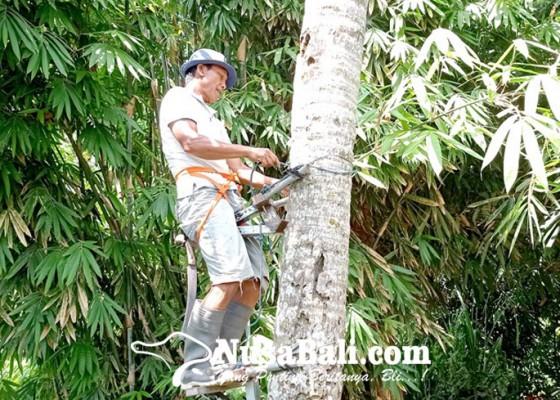 Nusabali.com - dari-pemanjat-kelapa-hingga-cangkul-pemalas