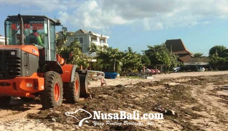www.nusabali.com-sampah-rumput-laut-kotori-pantai-tanjung-benoa
