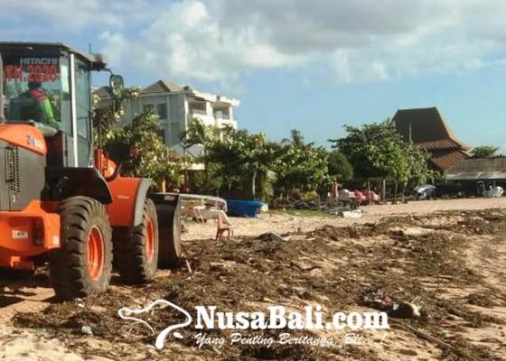 Nusabali.com - sampah-rumput-laut-kotori-pantai-tanjung-benoa