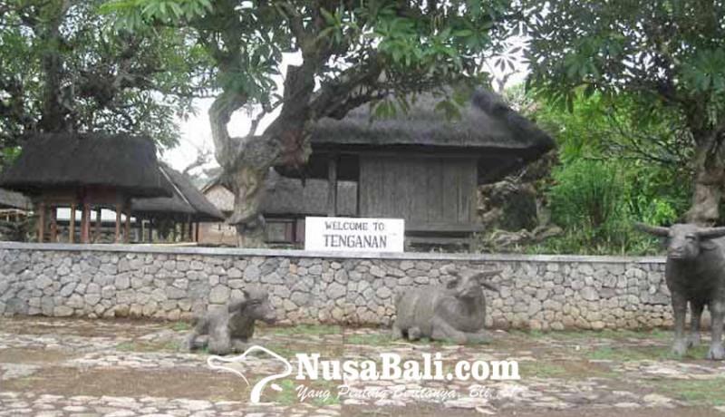 www.nusabali.com-mengintip-kerbau-suci-di-tenganan-pagringsingan