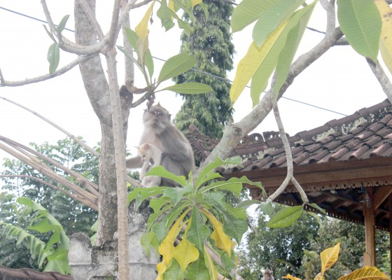 Nusabali.com - kerukunan-binatang