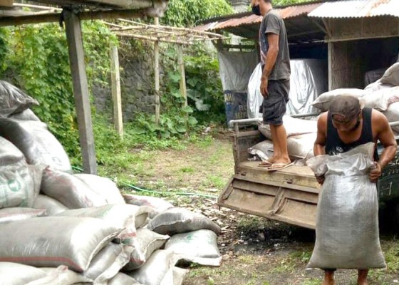 Nusabali.com - distan-gianyar-alokasi-5272-ton-pupuk-urea-bersubsidi