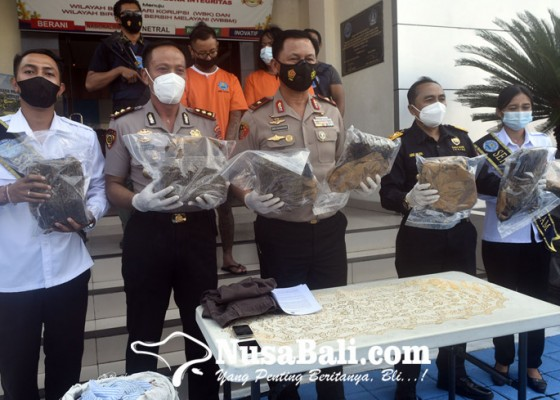 Nusabali.com - pengedar-93-kilogram-ganja-kering-ditangkap-bnnk-badung