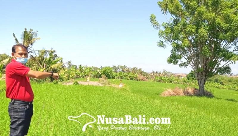 www.nusabali.com-lahan-sman-2-sukawati-terkendala-akses-jalan