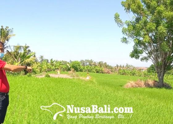 Nusabali.com - lahan-sman-2-sukawati-terkendala-akses-jalan
