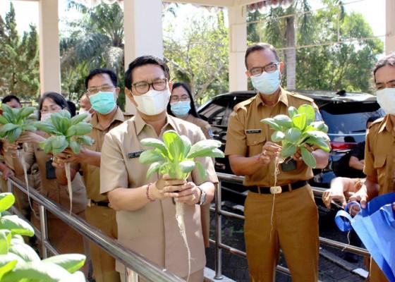 Nusabali.com - panen-sayuran-hidroponik-ubah-mindset-berkebun-di-lahan-terbatas