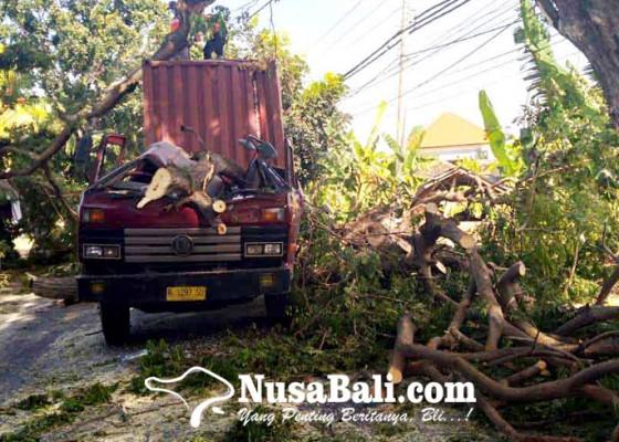 Nusabali.com - truk-tertimpa-pohon-sopir-dan-kernet-selamat