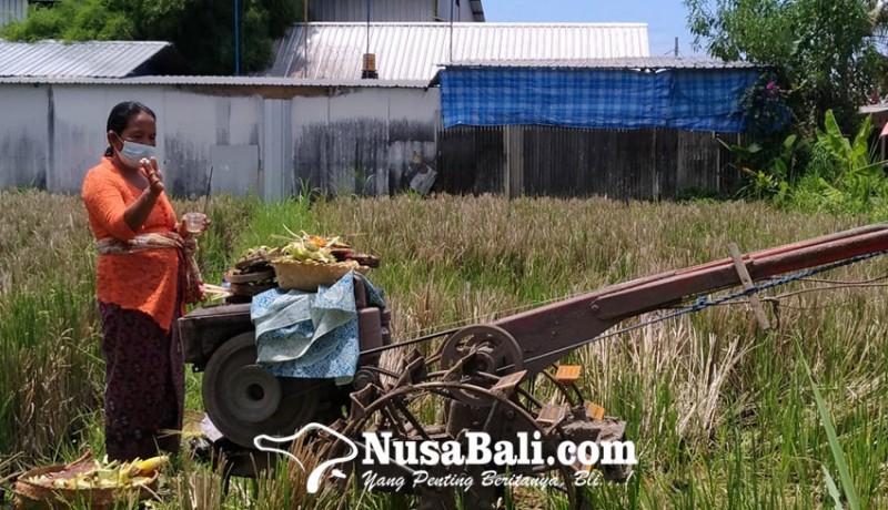 www.nusabali.com-krama-bali-mesti-pasaja-dan-sutindih