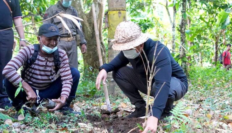 www.nusabali.com-wabup-ipat-tanam-bambu-petung
