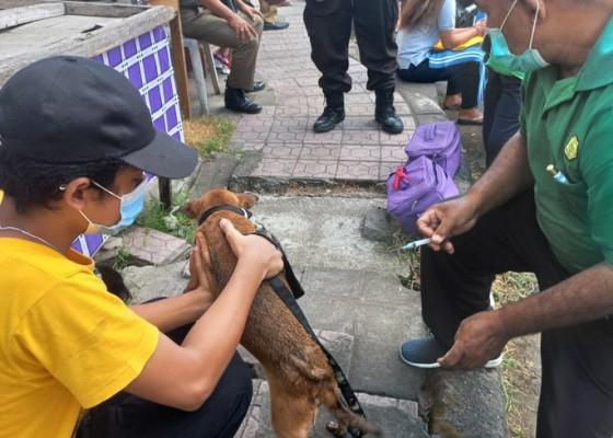 Nusabali.com - distan-vaksinasi-125-ekor-anjing-di-pegending