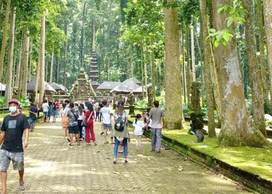 Nusabali.com - liburan-dtw-sangeh-lengang