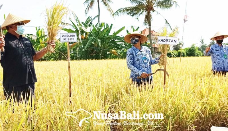 www.nusabali.com-dinas-pertanian-kampanye-penggunaan-pupuk-organik
