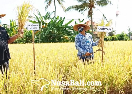 Nusabali.com - dinas-pertanian-kampanye-penggunaan-pupuk-organik
