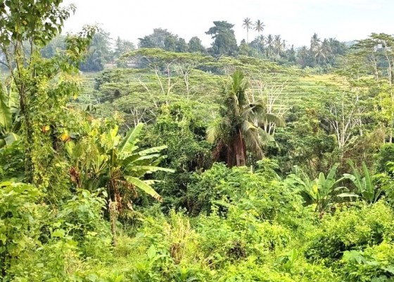 Nusabali.com - sidan-siapkan-tanam-organik-di-35-ha-lahan-tidur-warga