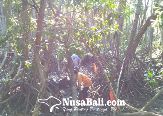 Nusabali.com - hutan-mangrove-dipenuhi-sampah-kiriman-dari-hulu