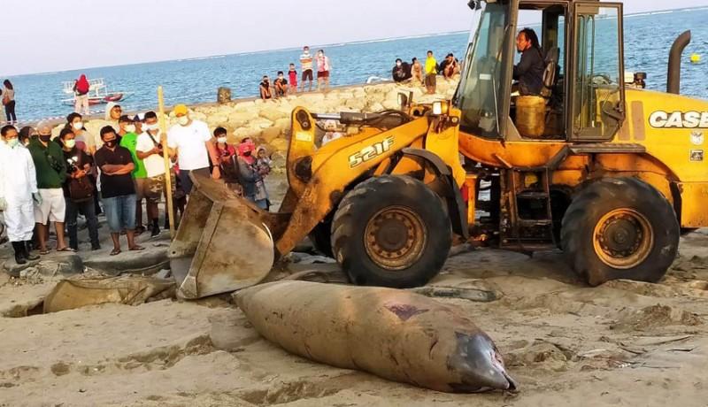 www.nusabali.com-bangkai-paus-seberat-1-ton-ditemukan-di-pantai-mertasari
