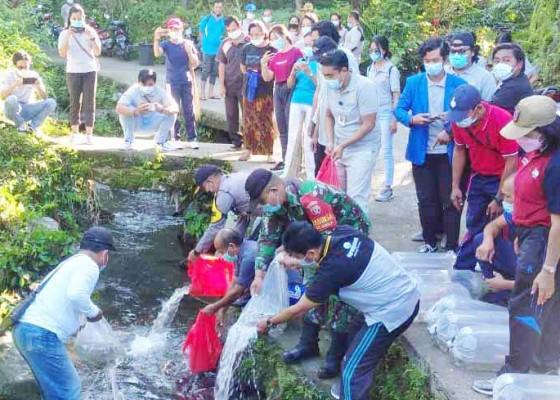 Nusabali.com - dinas-perikanan-dan-mahasiswa-tebar-5000-ikan-nila