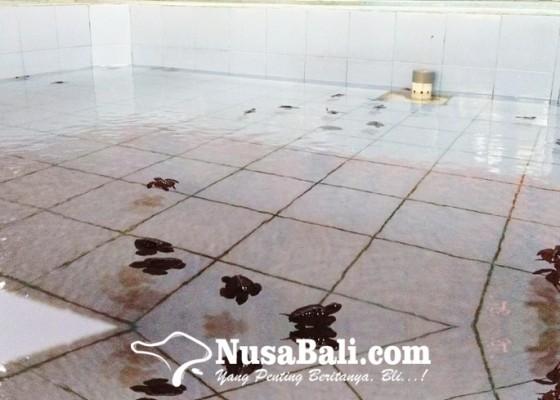 Nusabali.com - melepasliarkan-tukik-wisata-new-experience-di-kota-denpasar