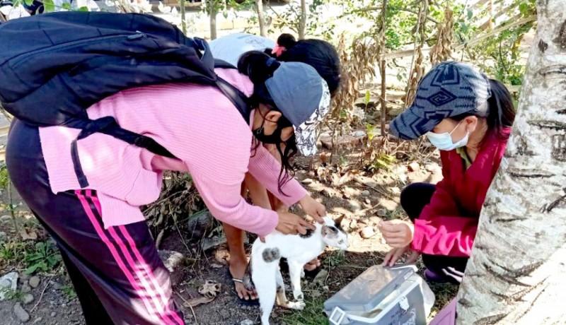 www.nusabali.com-lagi-anjing-rabies-gigit-6-warga-di-batuagung