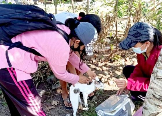 Nusabali.com - lagi-anjing-rabies-gigit-6-warga-di-batuagung