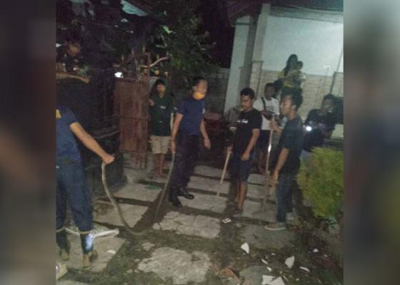 Nusabali.com - petugas-damkar-evakuasi-ular-kobra