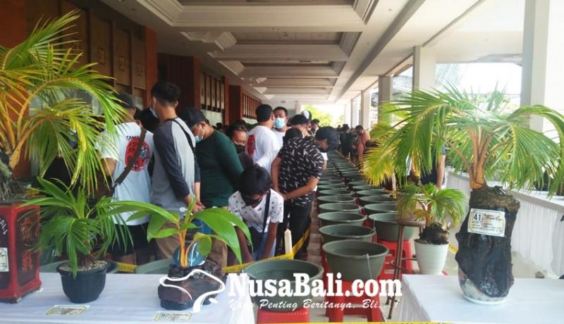 www.nusabali.com-seru-kontes-ikan-koki-bali-kolaborasi-pameran-bonsai-kelapa