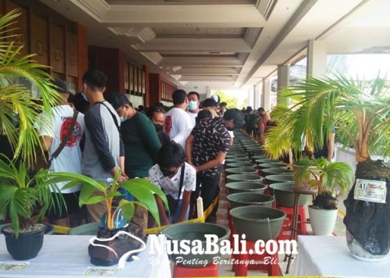 Nusabali.com - seru-kontes-ikan-koki-bali-kolaborasi-pameran-bonsai-kelapa