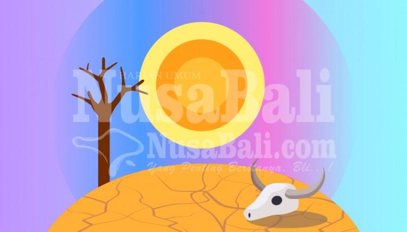 www.nusabali.com-sawah-di-selemadeg-raya-rentan-tertimpa-kekeringan