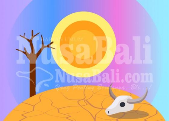 Nusabali.com - sawah-di-selemadeg-raya-rentan-tertimpa-kekeringan